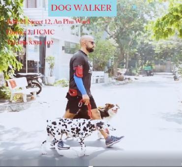 Dog walker Thao Dien, District 2, Ho Chi Minh